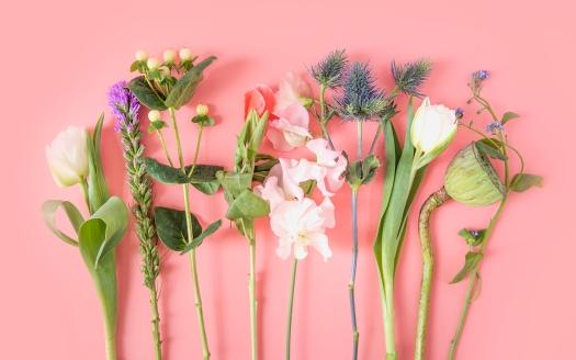 SSS spring flowers 4